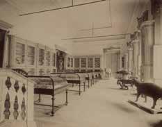 Museu de Zoologia da Universidade de Coimbra, c. 1900. Por Augusto Bobone